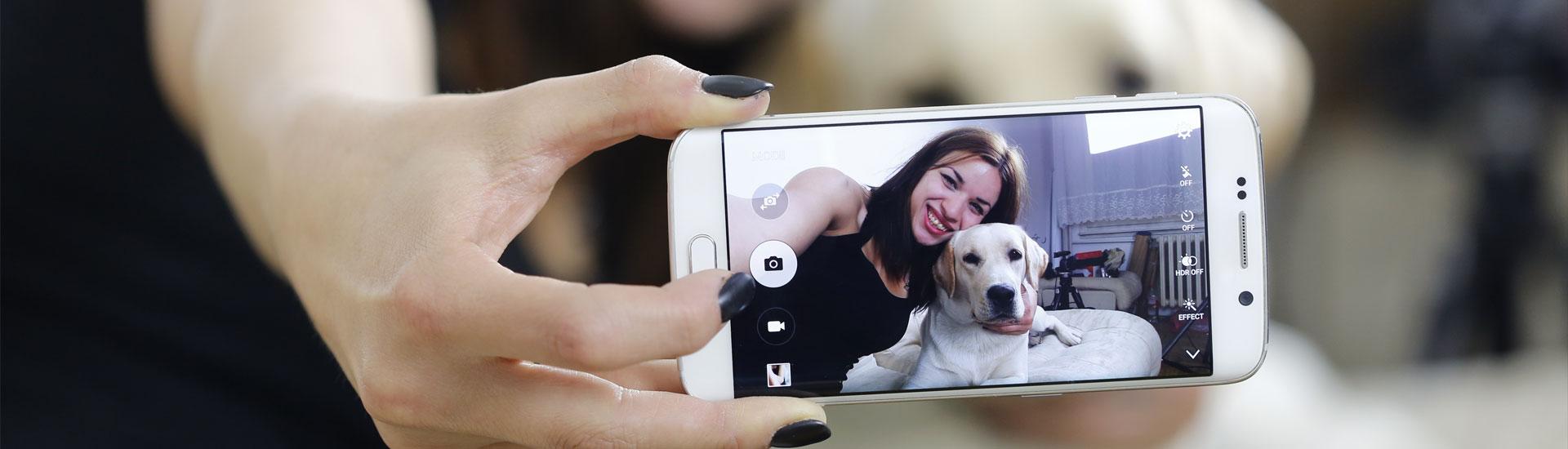 fotografar seu cão