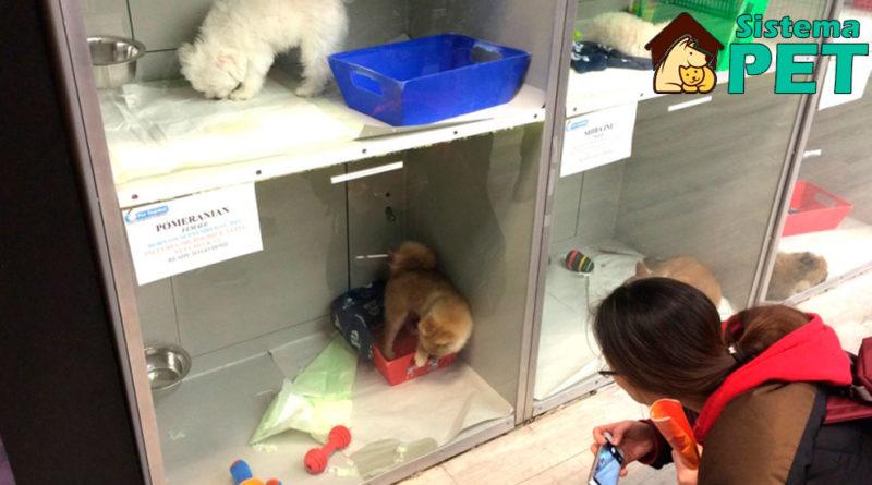 venda filhote em pet shop