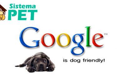 Google Ads Criadores