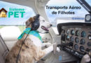 Transporte Aéreo de Filhotes