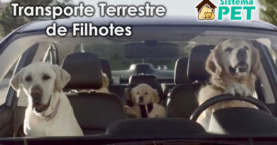 Transporte Terrestre de Filhotes